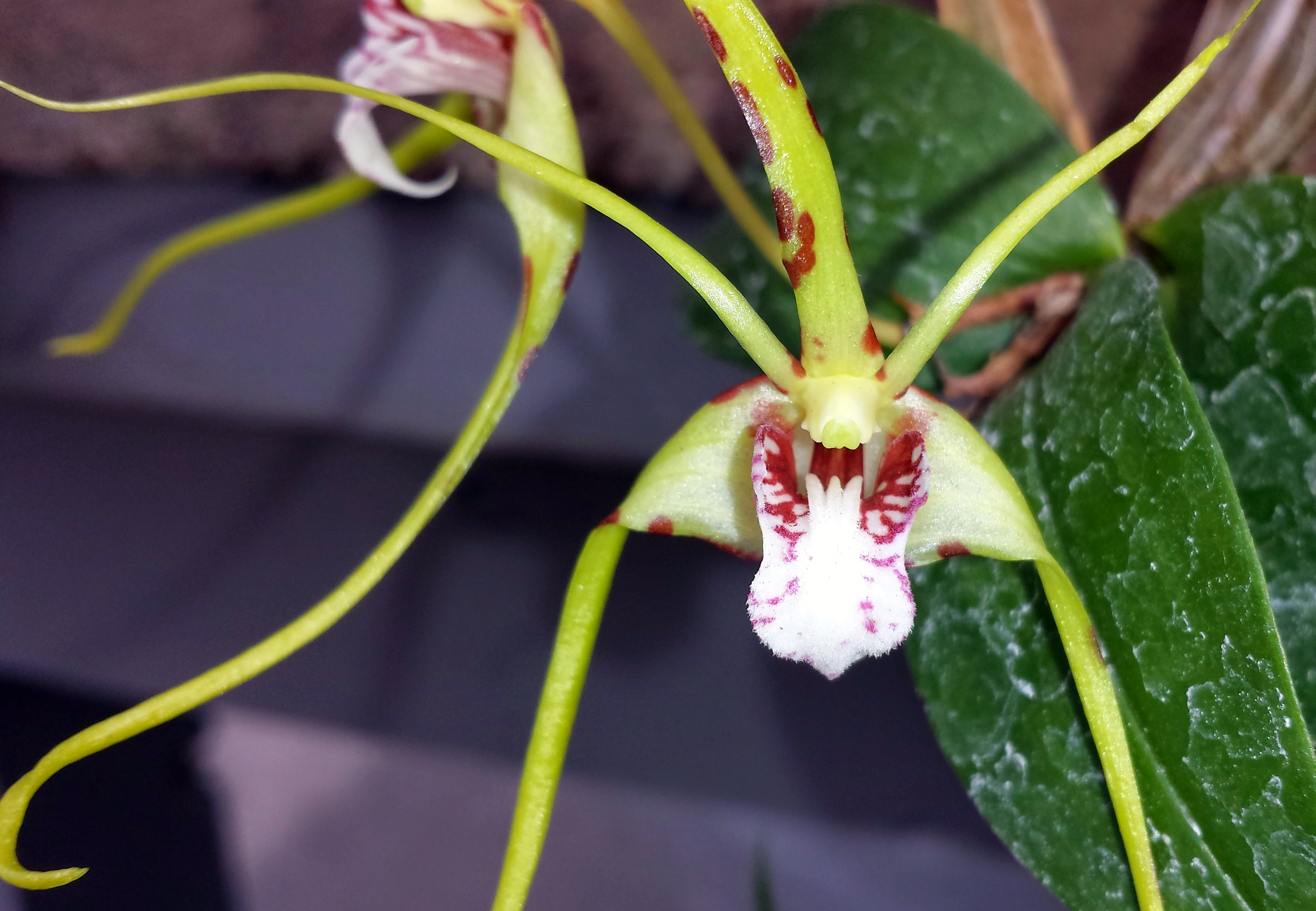 How to water orchids at home: just about the complex